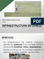 Infraestructura en Ovinos