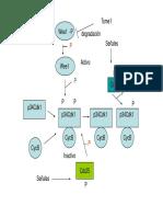 ciclocelmitosis_9554.pdf