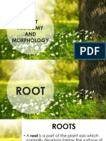 Plant Anatomy and Morphology (1)