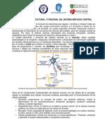 Organización Estructural y Funcional Del Snc