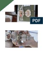 gambar saraf & urogenital.docx