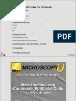 3MACCulturaViral_Alunos.pdf