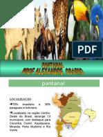 Geografia PPT - Pantanal