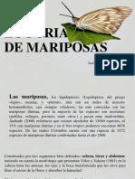 Mariposa Rio