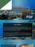 CARLOS MICHEL FUMERO-Vida Marina, Playas y Actividades de Submarinismo