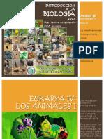 biodiversidad eukarya