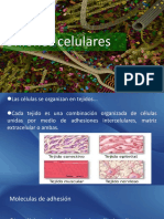 Adhesión celular.pdf