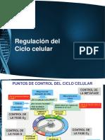 Regulación Del Ciclo Celular 1 y 2
