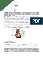 Organ Jantung