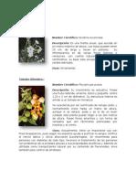 Fauna y Flora de Lima