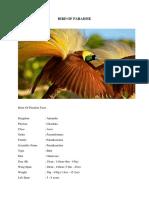 BIRD OF PARADISE-1.docx