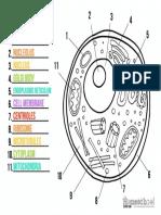 partes de una célula