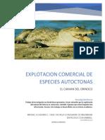 Explotacion de Especie Autoctona Cocodrilo Del Orinoco en Venezuela