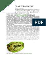 EL HIGO Y LA REPRODUCCIÓN.docx
