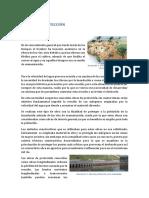 OBRAS DE PROTECCIÓN fin.docx
