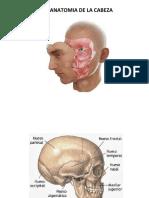 Anatomia de La Cara