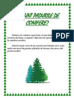 Proiect-Paduri de conifere.docx