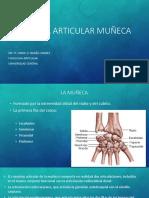 Fisiología Articular Muñeca
