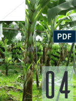 Vista de Efecto de Riegos Presurizados Sobre Propiedades Físicas de Un Suelo Bananero Asociado Con Kudzu (Pueraria Phaseoloides Benth)