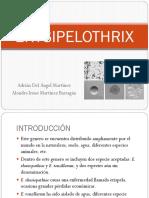 ERYSIPELOTHRIX ALONDRA (1).pptx