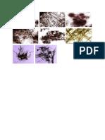 Gambar Glukosa Literatur