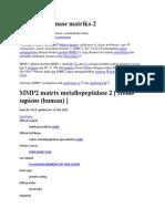 MMP 2