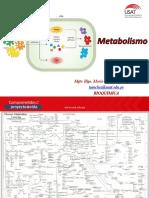 Metabolismo de Chis 2018 II.pptx