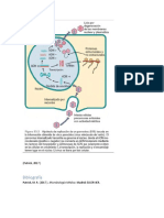 parvovirus .docx