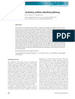 Revisiting the dissimilatory sulfate reduction pathway