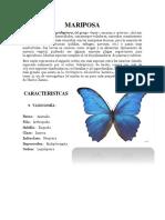 Mariposa ensayo