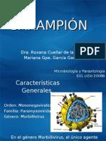 Paramixovirus