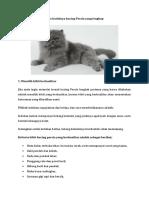 Cara Budidaya Kucing Persia Yang Lengkap
