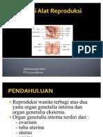 Anatomi Alat Reproduksi Wanita 2