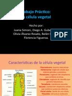 La Celula Vegetal (2) 7a