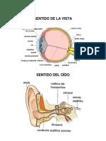 SENTIDOS 2019.docx