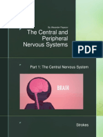 the central and peripheral nervous systems