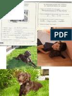 Erasmo PDF