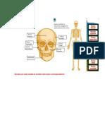 anatomia de los huesos.docx