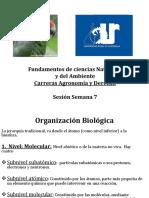 Presentacion Semana 7