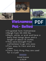 vietnamese pot-bellied - poster example name edit