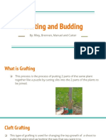 grafting and budding - student example 1