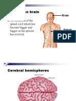 03 Brain Basics