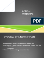 Action Potential 1