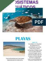 Ecosistemas acuaticos.pptx