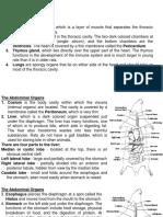 Rat Digestive System