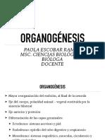 Organogenesis.pdf