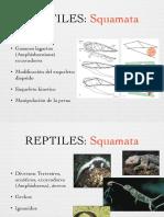 Reptiles II.pdf