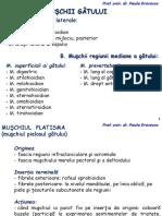 musculaturaspatetoraceabdomen-180109082200.pdf