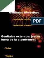 Genitales Femeninos Actual