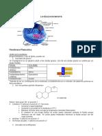 Resumen_transporte (2).pdf